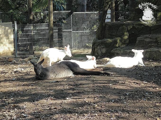 zoo020